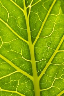 Primer plano de los nervios de la hoja verde