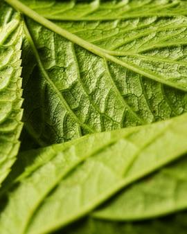Primer plano de los nervios de hojas verdes