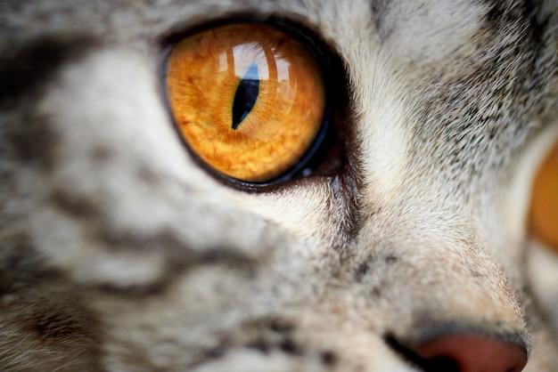 Primer plano de ojo de gato amarillo