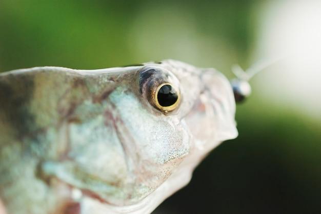 Primer plano de un ojo de pez