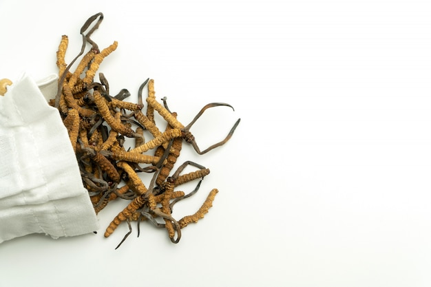 Primer plano de ophiocordyceps sinensis o seta cordyceps