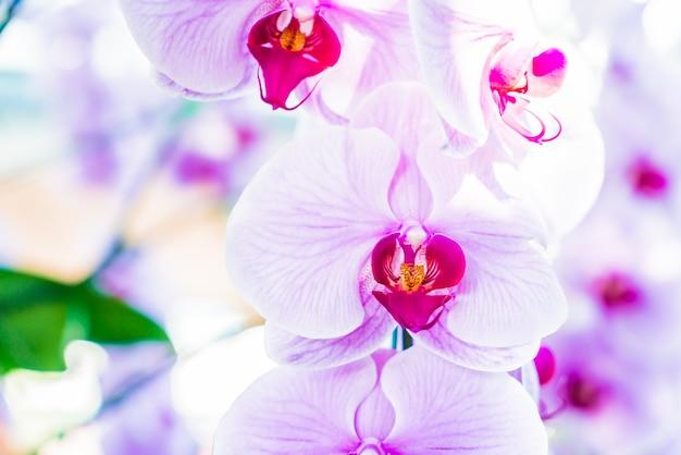 Primer plano de orquídeas bonitas