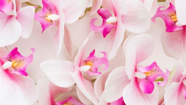 Primer plano de orquídeas rosadas