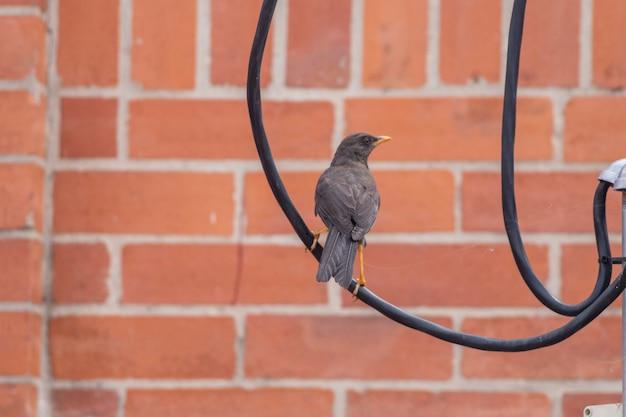 Primer plano, de, un, pájaro, aire libre