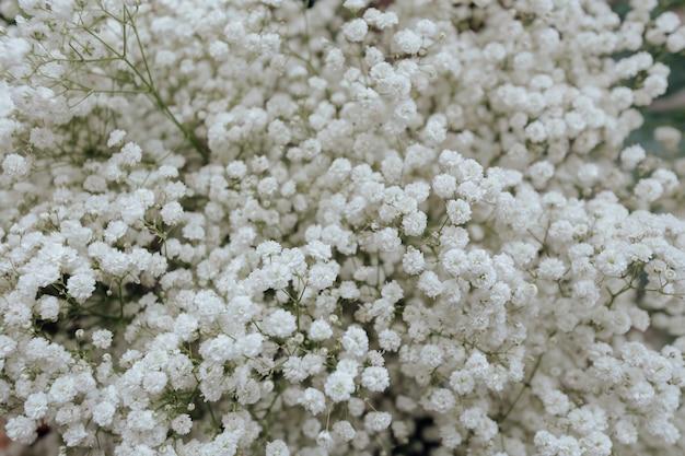 Primer plano de papel tapiz de flores de gypsophila blanco