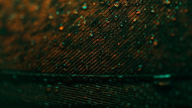 Primer plano de pavo real de plumas con gotas y luces