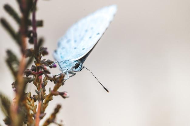 Primer plano de una pequeña mariposa en la flor