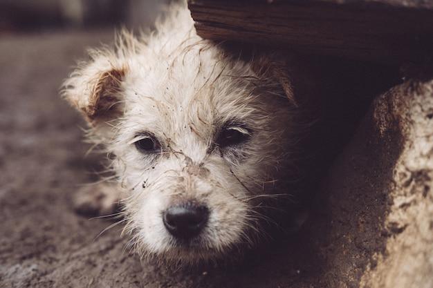 Primer plano de un perro sin hogar escondido debajo de una roca