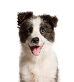 Primer plano de un perro de raza mixta jadeando