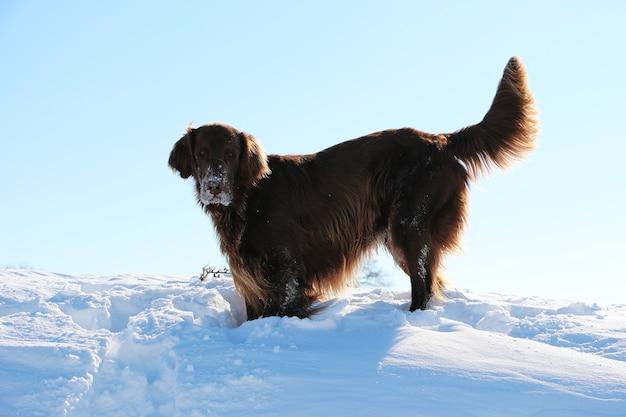 Primer plano de un perro de terranova