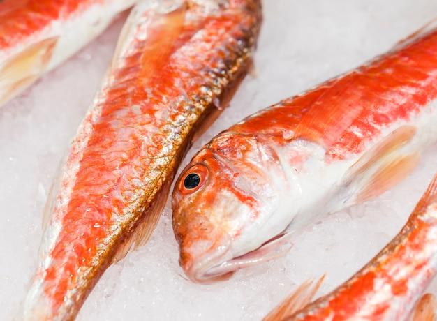 Primer plano de pescado rojo fresco en hielo