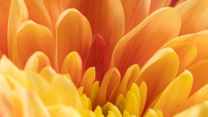 primer plano de pétalos de naranja y amarillo