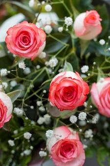 Primer plano pétalos de rosas hermosas