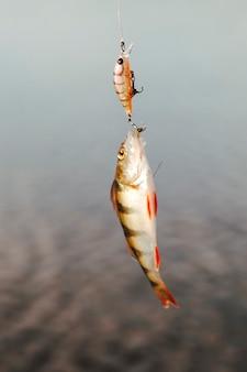 Primer plano de un pez atrapado con cebo de pesca