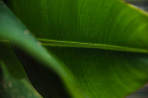 Primer plano planta deja en jardín