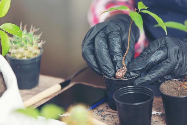 Primer plano de la planta de plantación de manos del jardinero