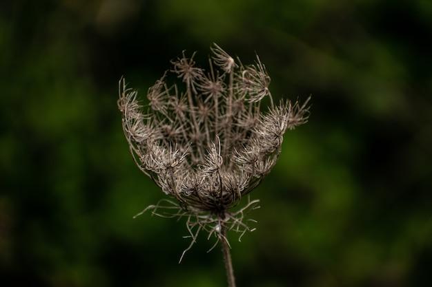 Primer plano de una planta seca