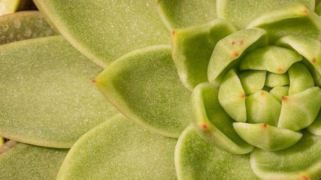 Primer plano, de, planta suculenta