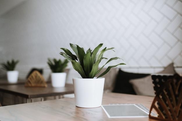 Primer plano de una planta verde en una vasija de cerámica blanca sobre una mesa en un café