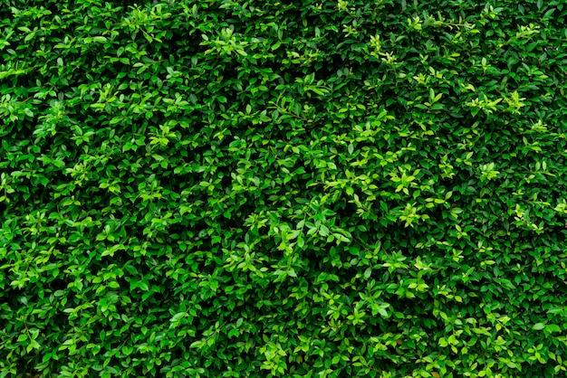 Primer plano de plantas de cobertura de hoja perenne.