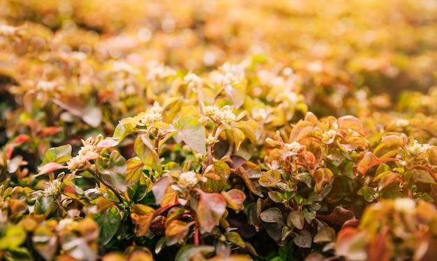 Primer plano de plantas con flores en la luz del sol