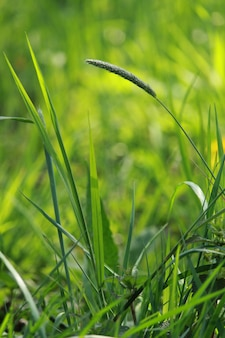 Primer plano de plantas y hierba verde fresca