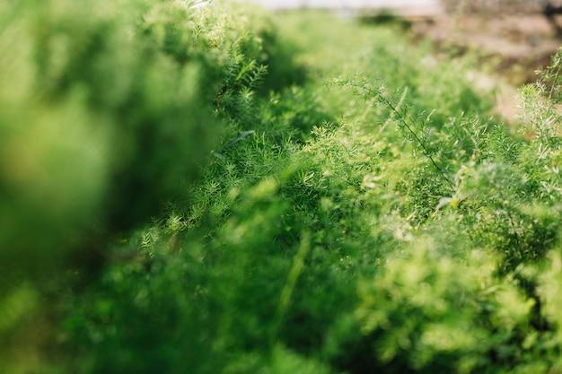 Primer plano de las plantas verdes frescas