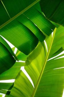 Primer plano de plantas verdes tropicales con un fondo blanco.