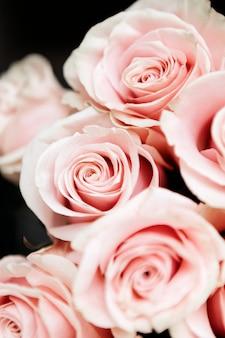Primer plano de la plantilla social de rosas rosadas