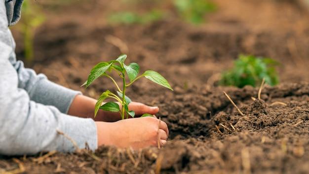 Primer plano, una plántula en manos de un niño. ¡día de la tierra!