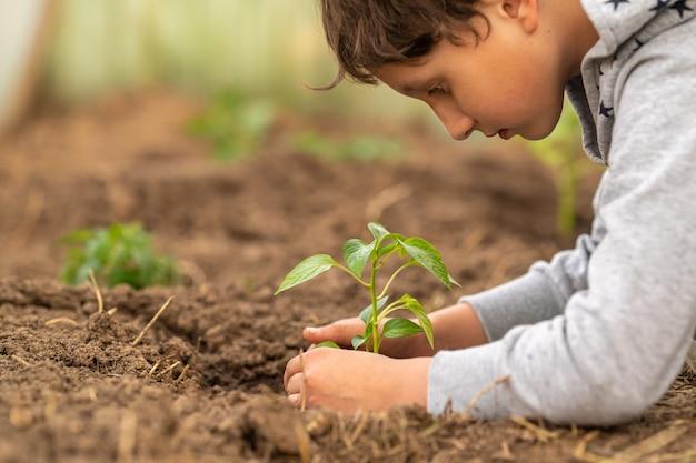 Primer plano, plántula en manos del niño. medio ambiente. ¡día de la tierra!