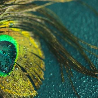 Primer plano de la pluma de pavo real en el fondo con textura