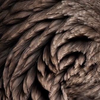 Primer plano de plumas de ganso de toulouse