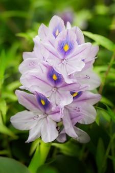 Primer plano de preciosa orquídea con fondo borroso