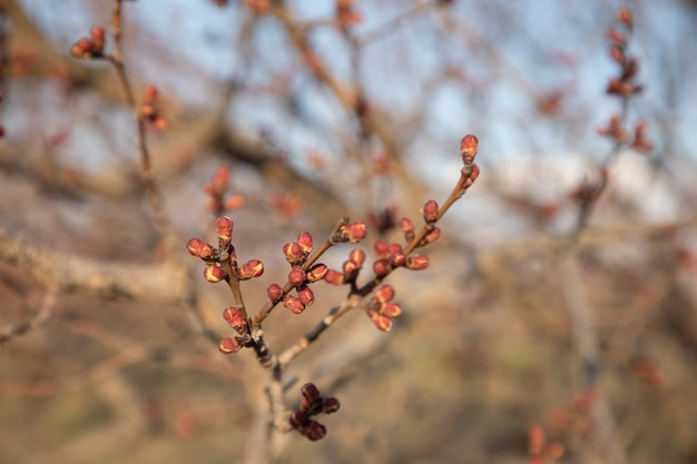 Primer plano de una rama floreciente