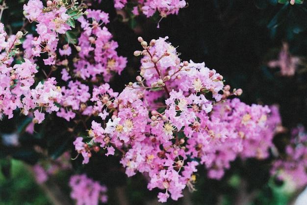 Primer plano de una rama de pequeñas flores púrpuras que crecen una al lado de la otra