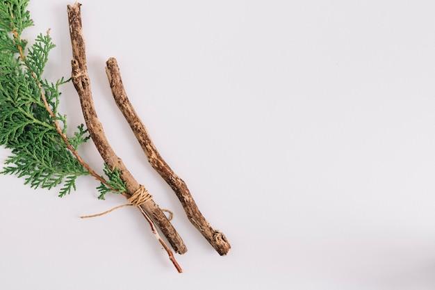 Primer plano de la ramita de cedro y rama aislada sobre fondo blanco