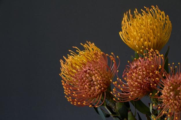 Primer plano de ramo de flores de protea exóticas amarillas y anaranjadas sobre un fondo oscuro