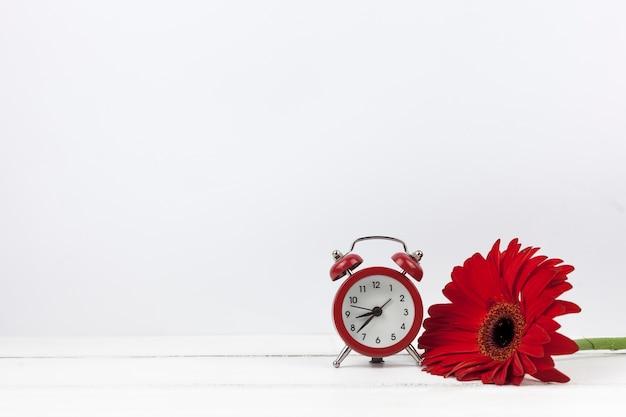 Primer plano de un reloj despertador y flor roja gerbera