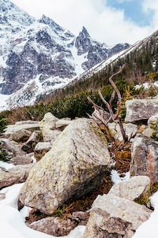 Primer plano de rocas cerca de la montaña con árboles