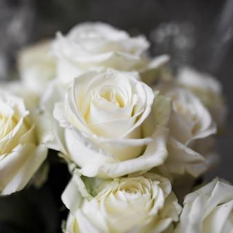 Primer plano de rosas blancas