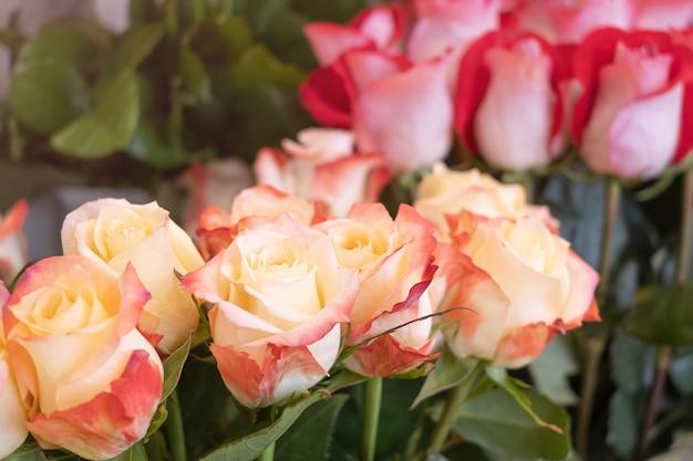 Primer plano de rosas en una florería con el telón de fondo de otras plantas y flores.