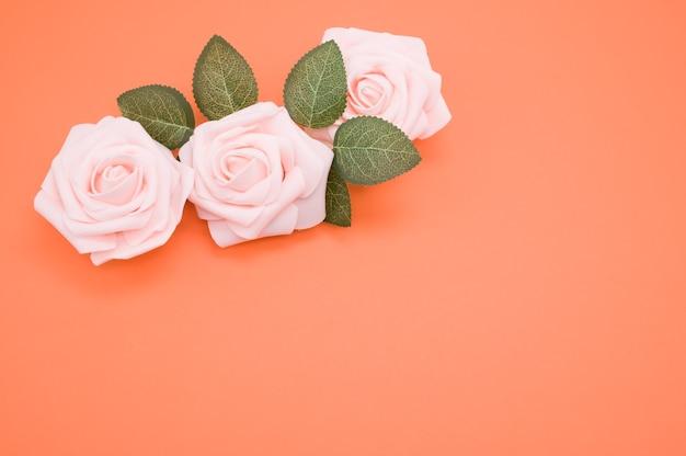 Primer plano de rosas rosadas aisladas sobre un fondo de coral con espacio de copia