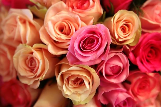 Primer plano de rosas rosadas y amarillas