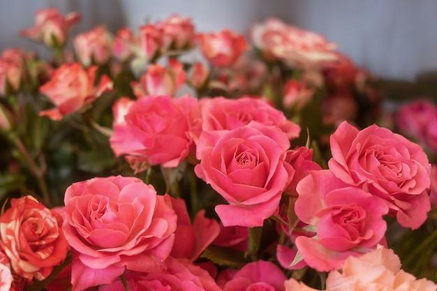Primer plano de rosas rosadas en una floristería con el telón de fondo de otras plantas y flores.