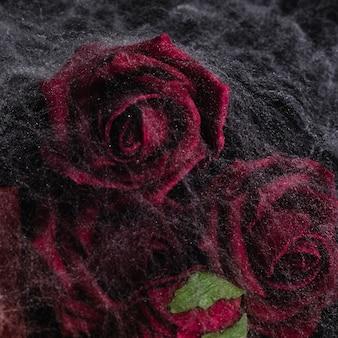 Primer plano de rosas con telaraña
