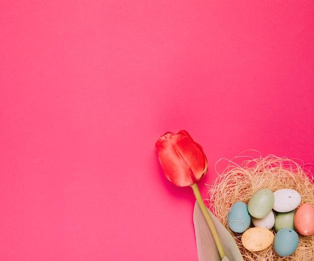 Primer plano de un solo tulipán rojo y coloridos huevos de pascua en la esquina de fondo rosa