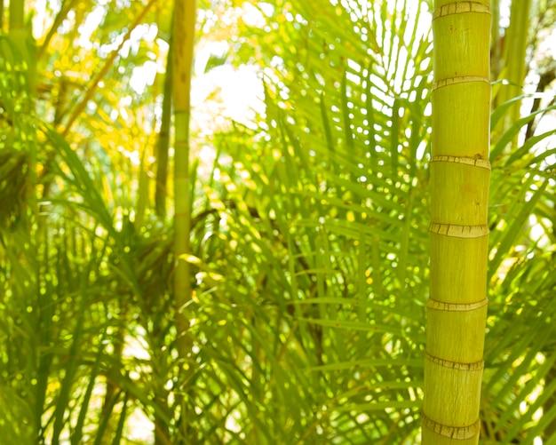 Primer plano del tallo de la palma areca