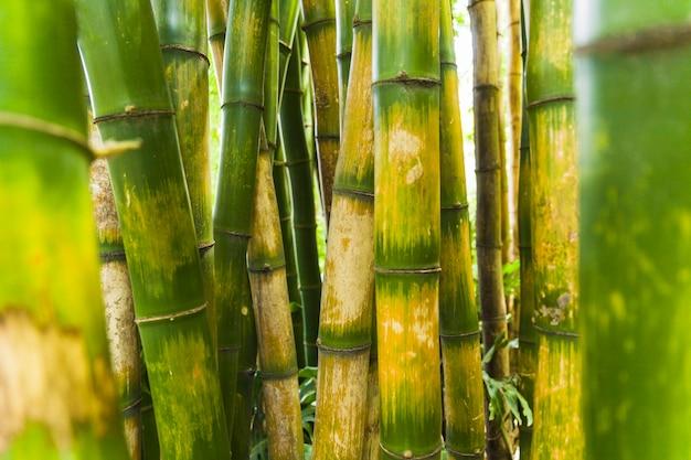 Primer plano de telón de fondo de bambú