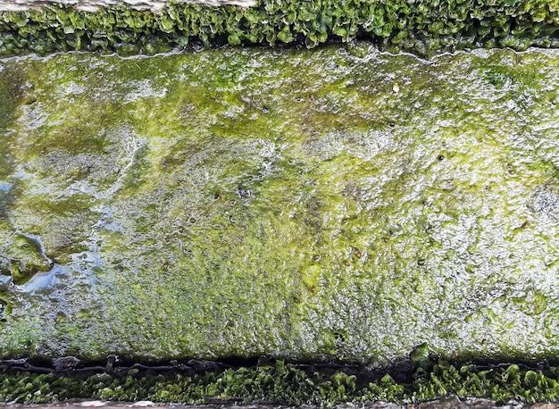 Primer plano de la textura de algas verdes sucias visto